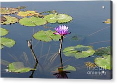 Water Lily And Dragon Fly One Acrylic Print by J Jaiam