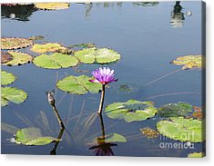 Water Lily And Dragon Fly Two Acrylic Print by J Jaiam