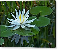 Water Lily And Reflection Acrylic Print