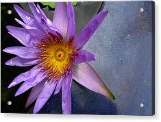 Lily Sparkle Acrylic Print