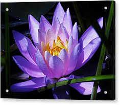 Water Lily Blues Acrylic Print by Sherman Perry