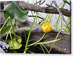 Acrylic Print featuring the photograph Water Lily by Cathy Mahnke