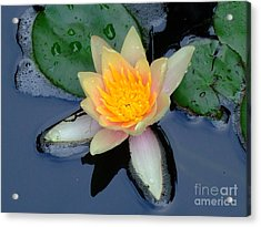 Acrylic Print featuring the photograph Water Lily by Deborah DeLaBarre