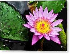 Acrylic Print featuring the photograph Water Lily by Denise Bird