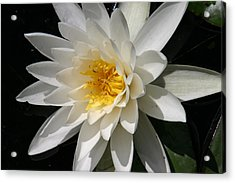 Acrylic Print featuring the photograph Water Lily  by Denyse Duhaime
