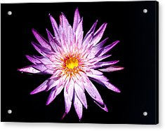 Water Lily. Acrylic Print