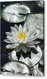 Acrylic Print featuring the photograph Water Lily II by Anita Oakley