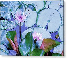 Water Lily II Acrylic Print by Ann Johndro-Collins