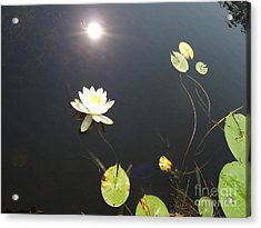 Water Lily Acrylic Print by Laurel Best