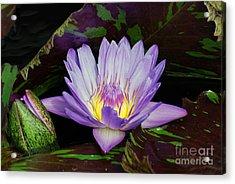 Water Lily Leopardess Acrylic Print
