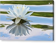 Water Lily Acrylic Print by Lisa Plymell