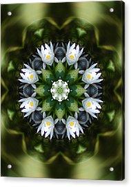 Water Lily Mandala Acrylic Print by Peter Kallai