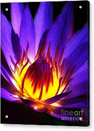 Water Lily Acrylic Print by Mike Nellums