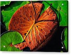 Water Lily Pad Acrylic Print by Louis Dallara