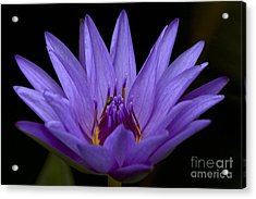Acrylic Print featuring the photograph Water Lily Photo by Meg Rousher