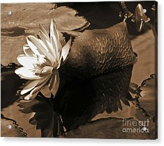Water Lily Pond Sepia Toned Photo Acrylic Print by Carol F Austin