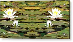 Water Lily Poster Acrylic Print by Dan Sproul