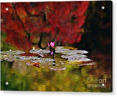 Water Lily Reflection Acrylic Print by Lisa L Silva