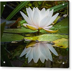 Water-lily Reflection Acrylic Print by Yvon van der Wijk