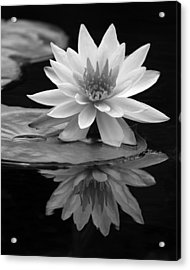 Water Lily Reflections I Acrylic Print by Dawn Currie