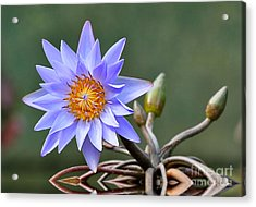 Acrylic Print featuring the photograph Water Lily Reflections by Kathy Baccari