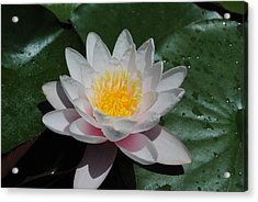 Acrylic Print featuring the photograph Water Lily by Robert  Moss