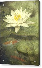 Water Lily Acrylic Print by Scott Norris