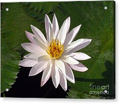 Acrylic Print featuring the photograph Water Lily by Sergey Lukashin