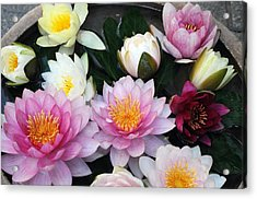 Acrylic Print featuring the photograph Water Lily Series -2  by Haleh Mahbod