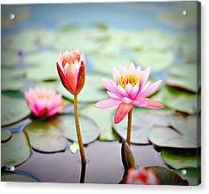 Water Lily's II Acrylic Print by Tammy Smith