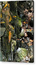 Acrylic Print featuring the photograph Water Of Life by Michele Myers