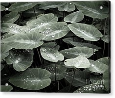 Acrylic Print featuring the photograph Water On Ivy by Ellen Cotton