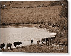 Water Parade Sepia Acrylic Print by Fred Lassmann