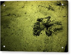 Water Pattern 3 Acrylic Print by Rajiv Chopra