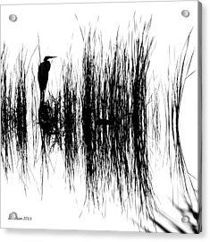 Water Reeds Acrylic Print