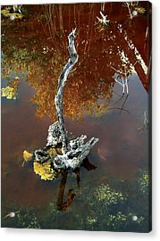 Water Stick Acrylic Print by Mike Feraco