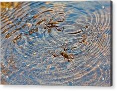 Waterbugs Acrylic Print
