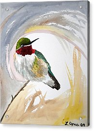 Acrylic Print featuring the painting Watercolor - Broad-tailed Hummingbird by Cascade Colors