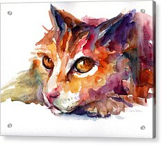 Watercolor Orange Tubby Cat Acrylic Print by Svetlana Novikova