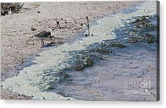 Acrylic Print featuring the photograph Watercolor Sandpipers by Jeanne Forsythe