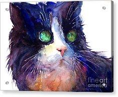 Watercolor Tuxedo Tubby Cat Acrylic Print