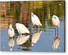 Watercolors In Nature 2 Acrylic Print by Fraida Gutovich