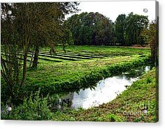 Watercress Field Acrylic Print by Olivier Le Queinec