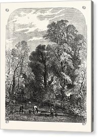Watercress-gathering Acrylic Print by Read, Samuel (1816-83), English