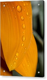 Waterdrops Acrylic Print by Amr Miqdadi
