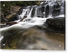 Watered Log Acrylic Print by Bill Cantey