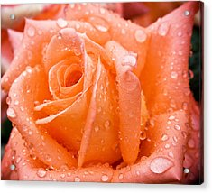 Watered Rose Acrylic Print