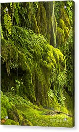 Acrylic Print featuring the photograph Waterfall In Green by Bryan Keil