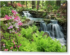 Waterfall With Ferns And Azaleas Acrylic Print by Panoramic Images