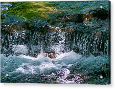 Waterflow Acrylic Print by Dennis Bucklin